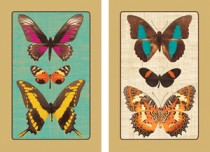 Caspari Deyrolle Butterfly